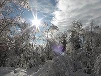 Winter im Woid