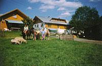 Ferienhaus Degenhart
