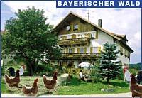 Ferienhof Sommer Bayerischer Wald