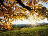 """"""" Herbstgefühle """""""