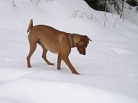 Winterurlaub mit Hund
