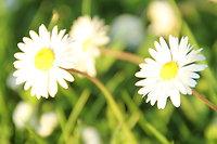 März-April Special !!Frühlingserwachen!!