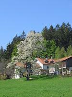 Osterzeit -Frühlingserwachen auf dem Bauernhof