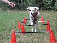 Fit for Fun für Mensch und Hund im September