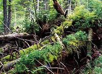 Waldwildnis - Ruhe und Entspannung !
