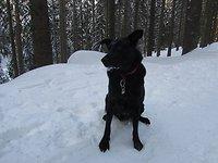 Schnuppertage  mit Hund Winterspass
