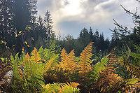 Herbst Wanderwochen