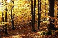 Goldener Herbst - Alles inklusive