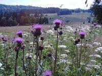 Frühling  Bayerischer W, Halbpension, Hallenbad