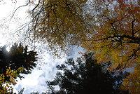 Wandern im bunten Herbstwald