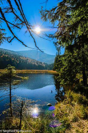 Wald(er)Leben - Baden im Wald